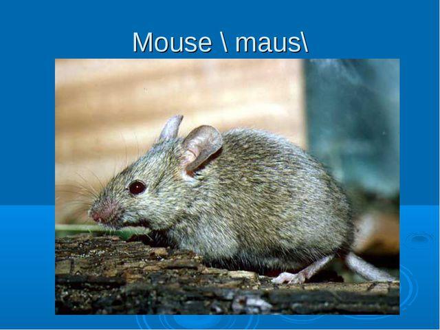 Mouse \ maus\