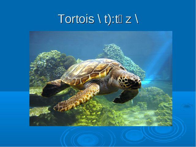 Tortois \ t):tәz \