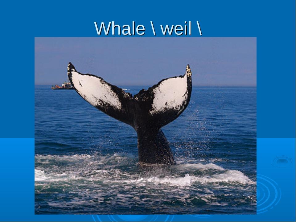 Whale \ weil \