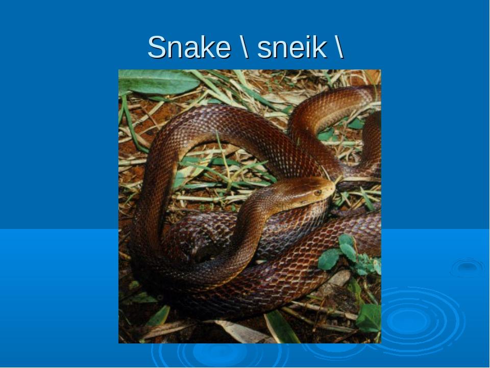Snake \ sneik \