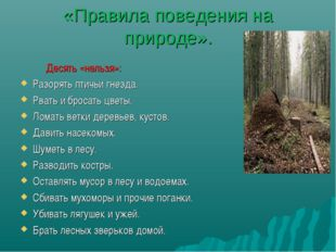 «Правила поведения на природе». Десять «нельзя»: Разорять птичьи гнезда. Рват