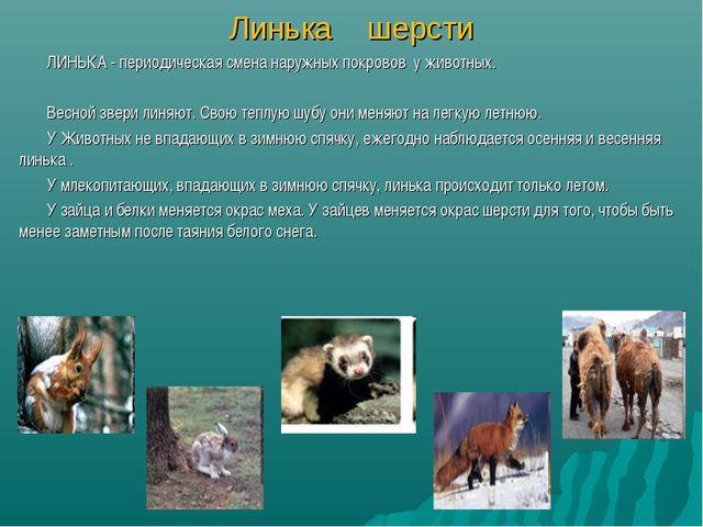 Линька шерсти ЛИНЬКА - периодическая смена наружных покровов у животных. Весн...
