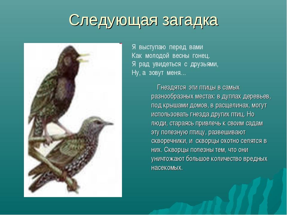 Следующая загадка Гнездятся эти птицы в самых разнообразных местах: в дуплах...