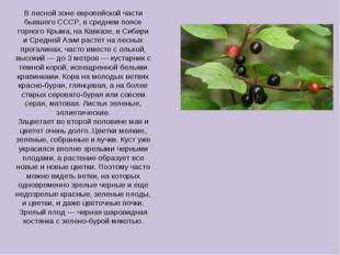 В лесной зоне европейской части бывшего СССР, в среднем поясе горного Крыма,
