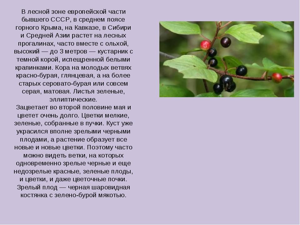 В лесной зоне европейской части бывшего СССР, в среднем поясе горного Крыма,...