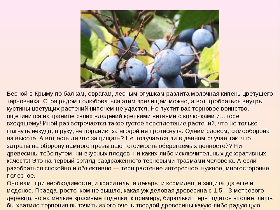 Весной в Крыму по балкам, оврагам, лесным опушкам разлита молочная кипень цве...