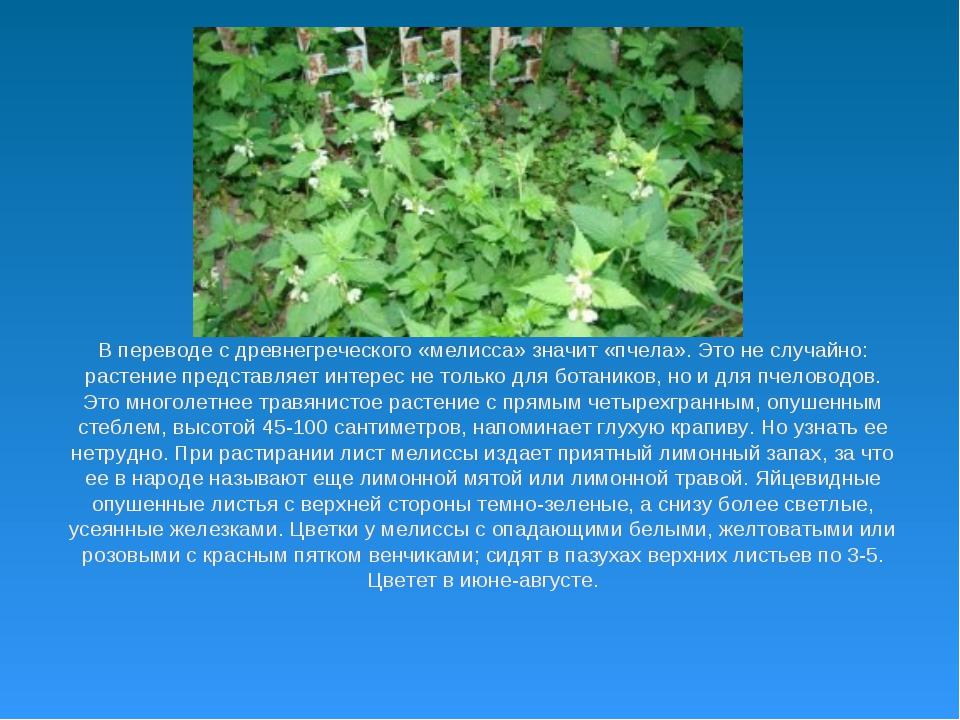 В переводе с древнегреческого «мелисса» значит «пчела». Это не случайно: раст...