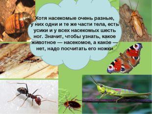 Хотя насекомые очень разные, уних одни итеже части тела, есть усики иувс