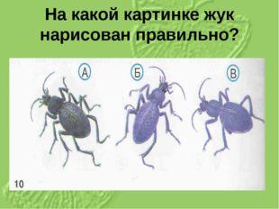На какой картинке жук нарисован правильно?