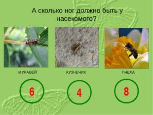 А сколько ног должно быть у насекомого? КУЗНЕЧИК МУРАВЕЙ ПЧЕЛА 6 4 8