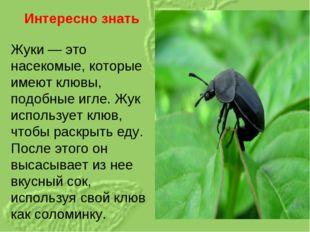 Интересно знать Жуки— это насекомые, которые имеют клювы, подобные игле. Жук