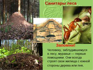 Санитары леса Запомни! Человеку, заблудившемуся влесу, муравьи— первые помо