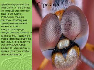 Стрекоза Зрение устроено очень необычно. У неё 2 глаза, но каждый глаз состои