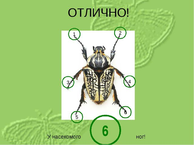 1 2 3 4 5 6 У насекомого ног! 6 ОТЛИЧНО!