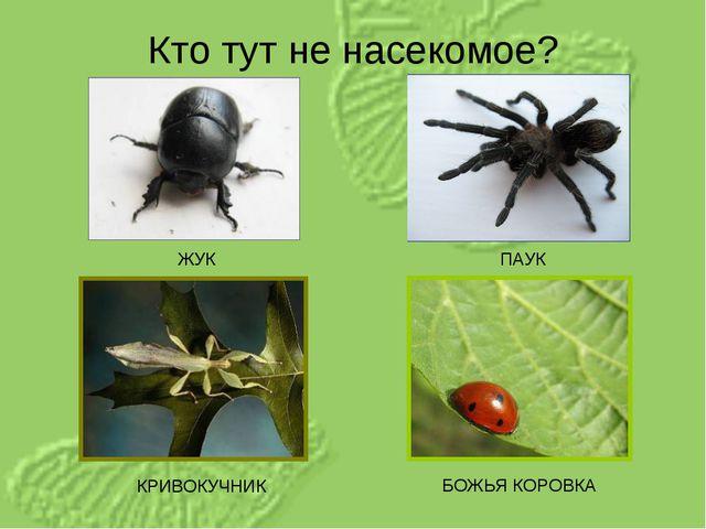 Кто тут не насекомое? ЖУК КРИВОКУЧНИК ПАУК БОЖЬЯ КОРОВКА
