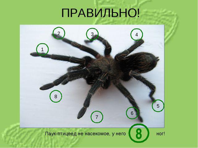 ПРАВИЛЬНО! Паук-птицеед не насекомое, у него ног! 1 5 4 3 2 6 7 8 8