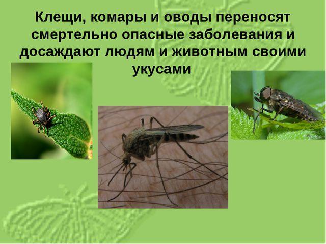 Клещи, комары и оводы переносят смертельно опасные заболевания и досаждают лю...