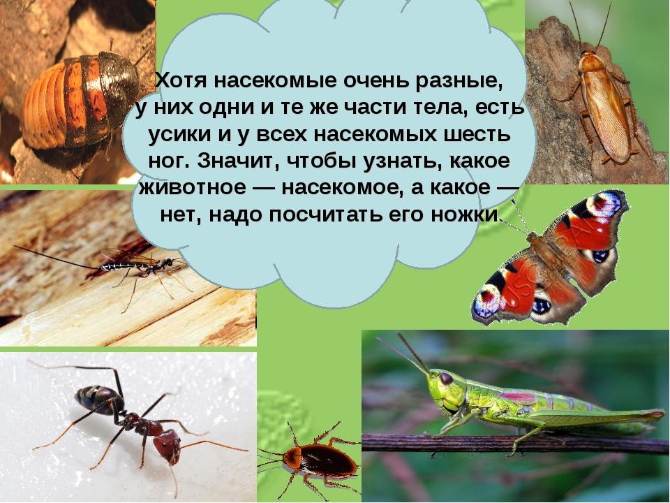 Хотя насекомые очень разные, уних одни итеже части тела, есть усики иувс...