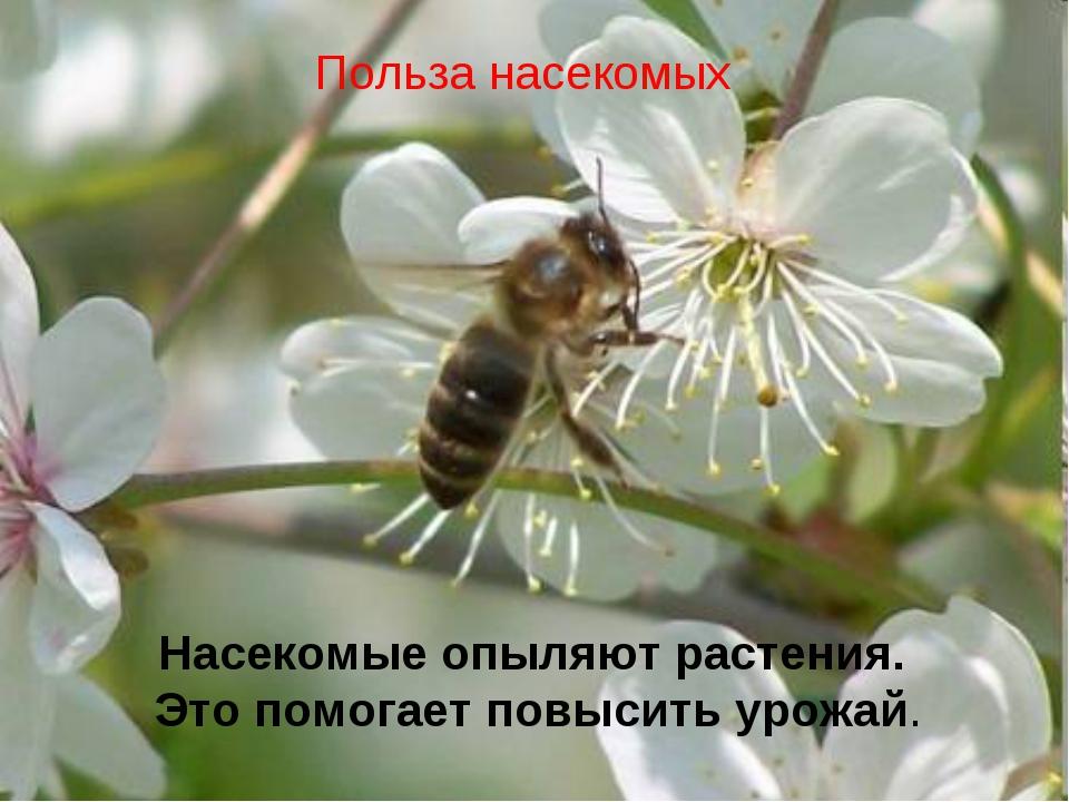Насекомые опыляют растения. Это помогает повысить урожай. Польза насекомых