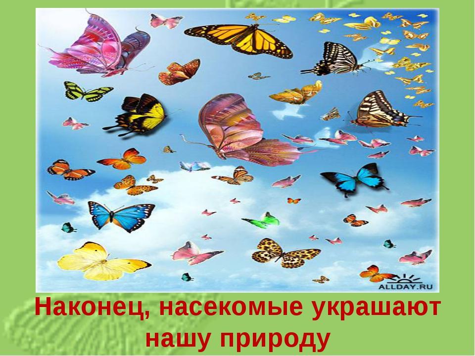 Наконец, насекомые украшают нашу природу