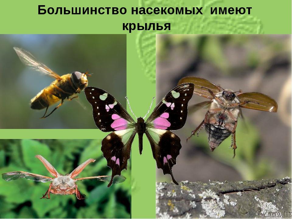 Большинство насекомых имеют крылья