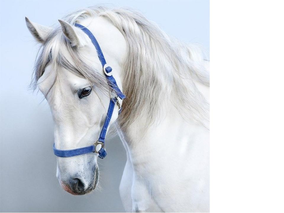 модель прекрасно фото головы белого коня данным ск, теракт