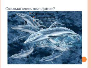 Сколько здесь дельфинов?