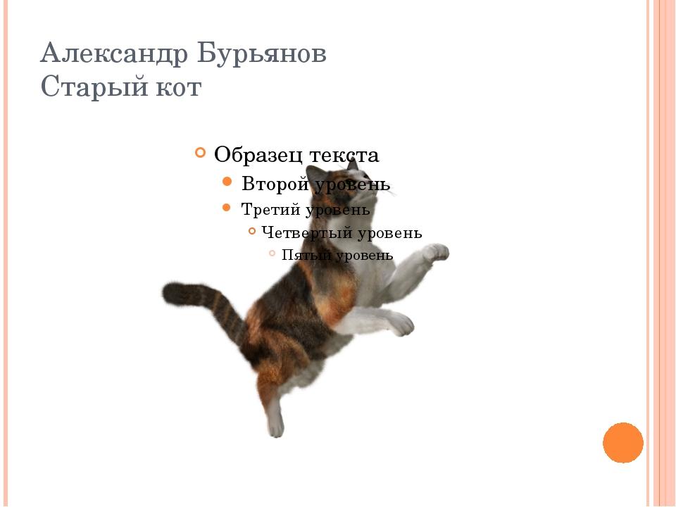 Александр Бурьянов Старый кот