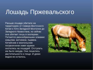 Лошадь Пржевальского Раньше лошади обитали на территориях от Северо-Восточног