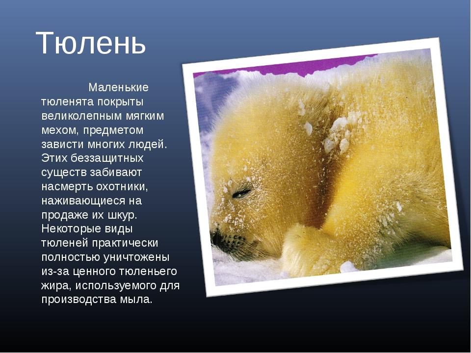 Тюлень Маленькие тюленята покрыты великолепным мягким мехом, предметом завис...