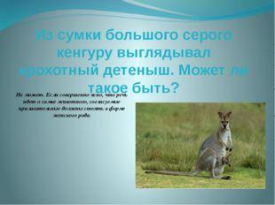 Из сумки большого серого кенгуру выглядывал крохотный детеныш. Может ли такое