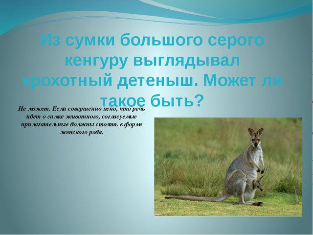 Из сумки большого серого кенгуру выглядывал крохотный детеныш. Может ли такое...