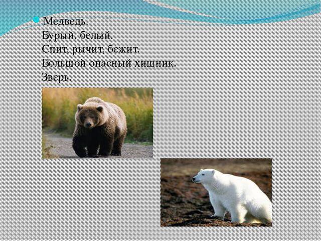 Медведь. Бурый, белый. Спит, рычит, бежит. Большой опасный хищник. Зверь.