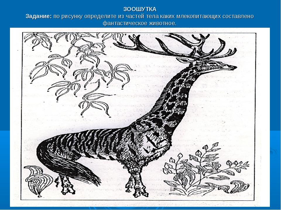 ЗООШУТКА Задание:по рисунку определите из частей тела каких млекопитающих со...