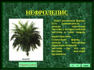 НЕФРОЛЕПИС Имеет различные формы. Есть разновидности с дважды перистыми листа