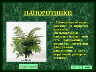 ПАПОРОТНИКИ Папоротник обладает розеткой из перистых изогнутых листьев(которы