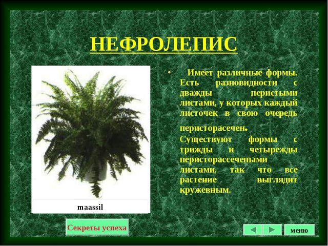 НЕФРОЛЕПИС Имеет различные формы. Есть разновидности с дважды перистыми листа...