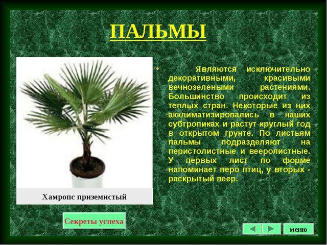 ПАЛЬМЫ Являются исключительно декоративными, красивыми вечнозелеными растения...
