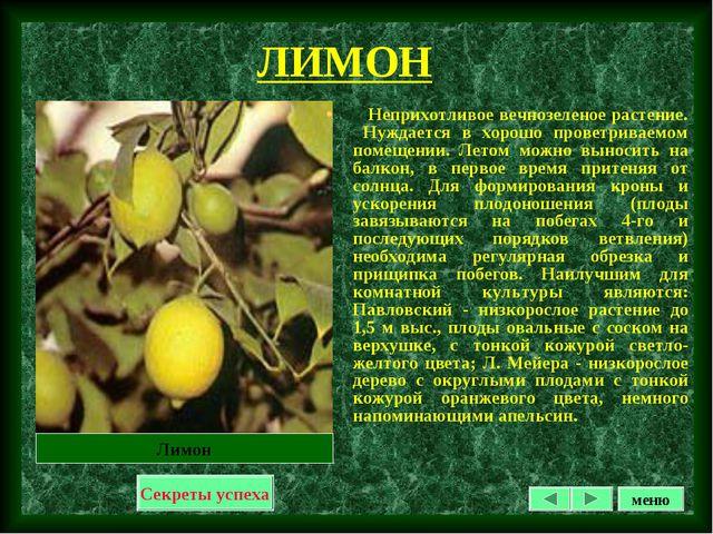 ЛИМОН Неприхотливое вечнозеленое растение. Нуждается в хорошо проветриваемом...