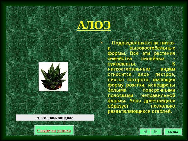 АЛОЭ Подразделяются на низко- и высокостебельные формы. Все эти растения семе...
