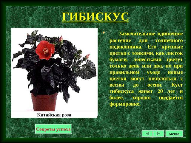 ГИБИСКУС Замечательное одиночное растение для солнечного подоконника. Его кру...