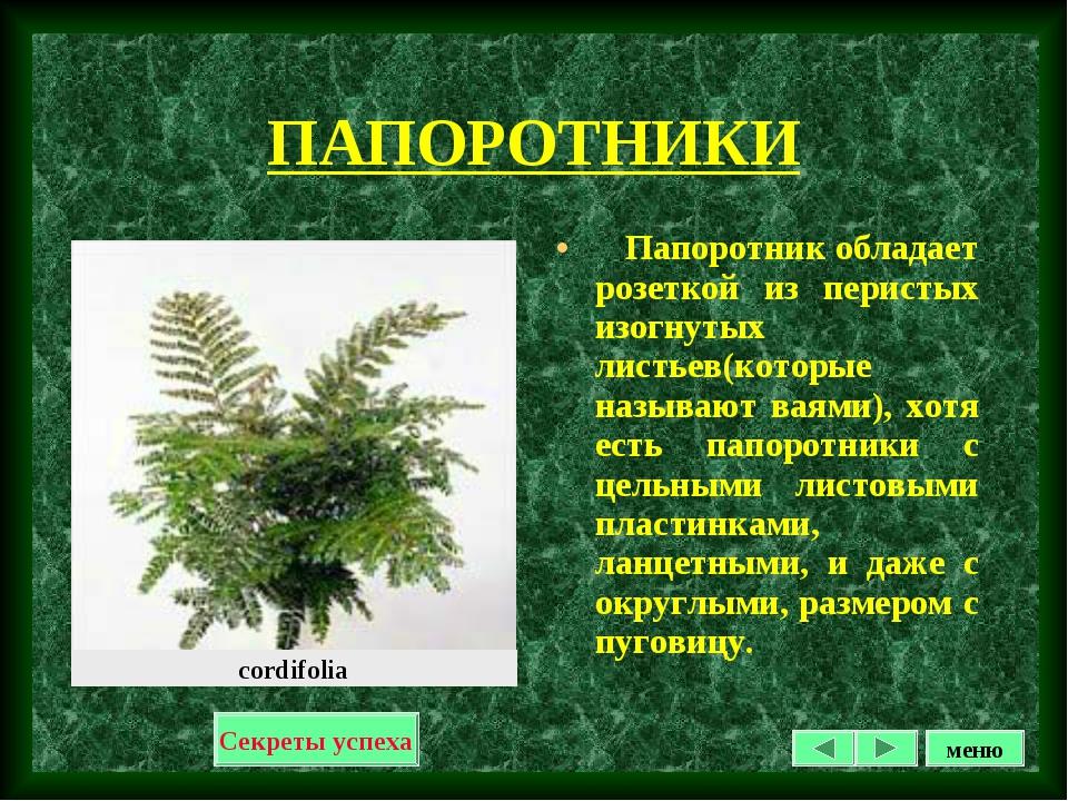 ПАПОРОТНИКИ Папоротник обладает розеткой из перистых изогнутых листьев(которы...