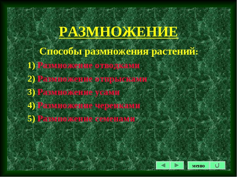 РАЗМНОЖЕНИЕ Способы размножения растений: 1) Размножение отводками 2) Размнож...