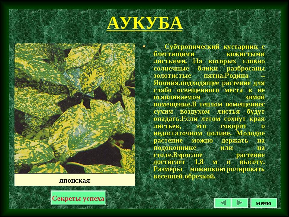 АУКУБА Субтропический кустарник с блестящими кожистыми листьями. На которых с...