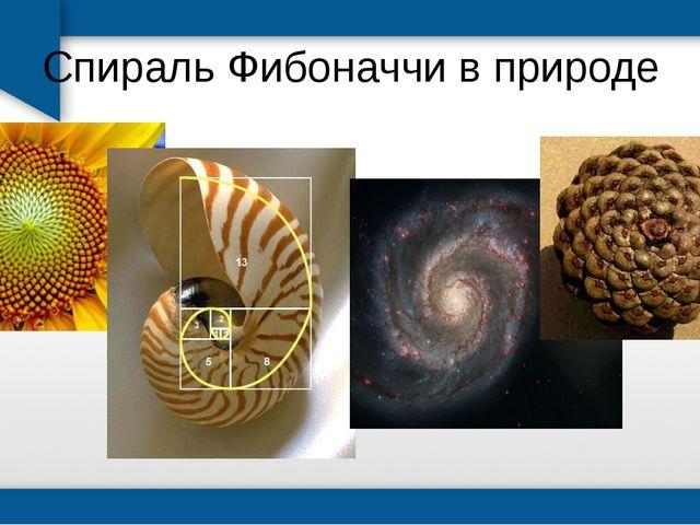 Спираль Фибоначчи в природе