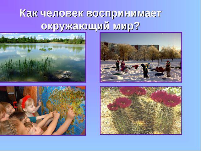 Как человек воспринимает окружающий мир?