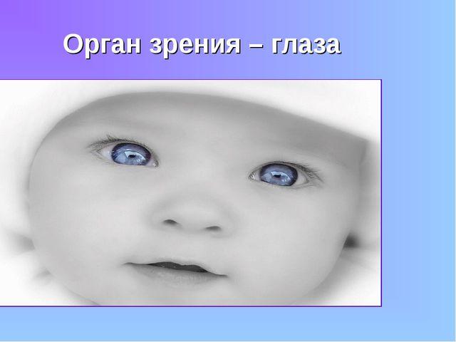 Орган зрения – глаза