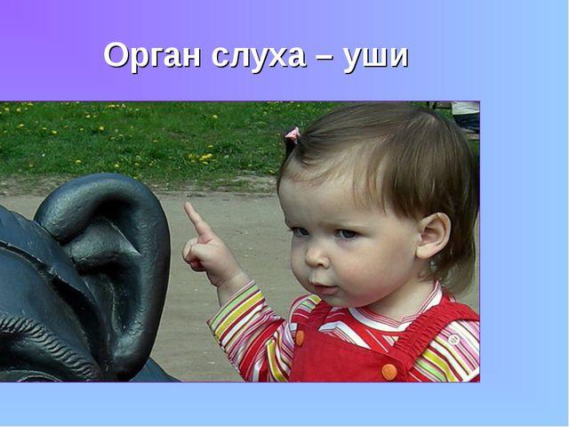 Орган слуха – уши