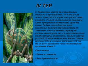 IV ТУР 3. Хамелеоны живут на низкорослых деревьях и кустарниках. Но больше на