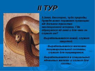 II ТУР 3.Змея, бесспорно, чудо природы. Прежде всего поражает пугающее: яд! В